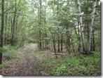 Crow Lane Trail