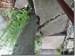 Devouring Concrete