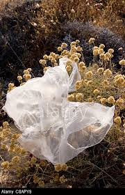 Plastic bag in bush