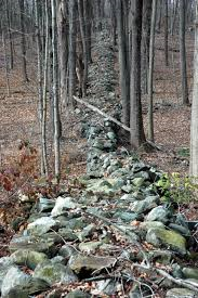 Stone walls cutting throug the forest