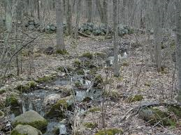 Stone walls in the forest
